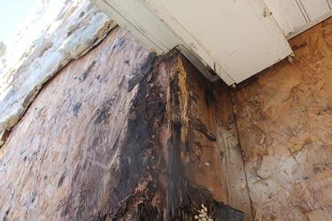 Stucco Moisture Damage